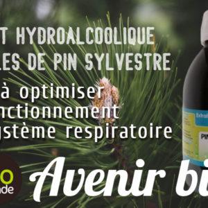 Extrait hydro alcoolique d'aiguilles de pin sylvestre
